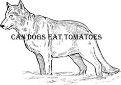 is avocado safe for dogs