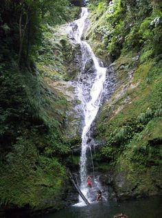 Rincon Waterfall ~Trinidad and Tobago