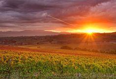 Montefalco: campagne de la région  d'Ombrie. Pas loin de Florence et beaucoup plus paisible et romantique.