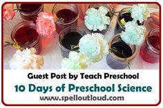 Colorful Carnations Preschool Science by @teach_preschool