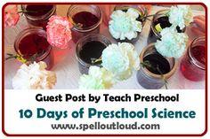 Colorful Carnations Preschool Science by @teach_preschool