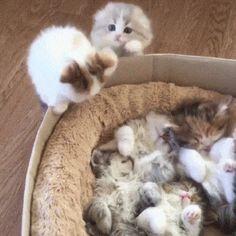 Sleeping and Awake Kittens