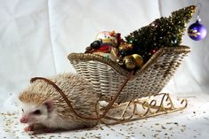 Part-Time Reindeer | Community Post: 30 Lucrative Occupations For Hedgehogs
