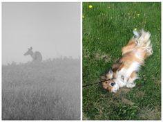 Some photos that I entered into contests on @twenty20! #dogdaysofsummer #foggymorning #deer #dog #nature #photography #twenty20