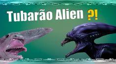 Alien é você? Peixe raro muito semelhante ao alienígena dos filmes