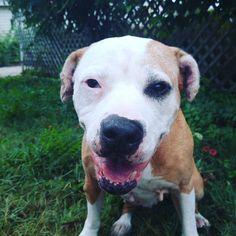 Happy #SundayFunday! It's wet and rainy here today.  It's also MUCH cooler than it has been. #dogstagram #dogsofinstagram #instagramdogs #woof #petstagram #cutedogs #seniordog #dogoftheday #rainyday #petlover #dogsoftheworld