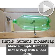 Make a Simple Humane Mouse Trap with a Soda Bottle