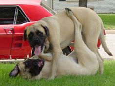 They always play together like this... It must be fun to be a dog.