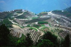 Picture of the Day: The Longsheng Rice Terraces ofChina