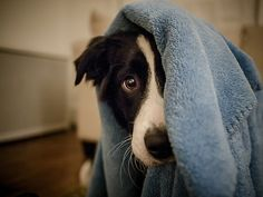 theanimalblog: I'm Hiding. Photo by Graham Gibson