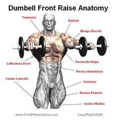 DUMBELL FRONT RAISES Dumbell front raises are an isolation exercise. That works the front head of the deltoid and the trapezius muscles. It is a great exercise to put into your shoulder workout. Bodybuilding Training, Bodybuilding Nutrition, Bodybuilding Workouts, Men's Bodybuilding, Chest Workouts, Fit Board Workouts, Gym Workouts, Front Raises, Muscle Anatomy