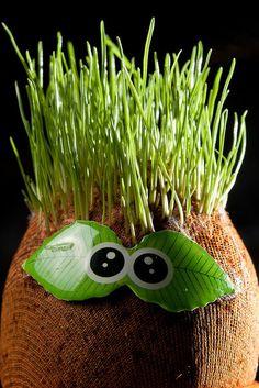 Ver fotos de 5 asombrosos experimentos con plantas y buscar más fotos en nuestras galerías de fotos en Yahoo Mujer Argentina. Stem Projects, Science Projects, Outside Activities, Activities For Kids, Diy For Kids, Crafts For Kids, Puppets For Kids, Tree Study, Outdoor Games For Kids