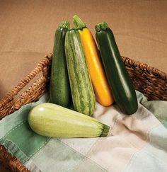 Summer Surprise Mixture of zucchini varieties. Zucchini Squash, Home Grown Vegetables, Backyard, Plants, Summer, Gardening, Food, Inspiration, Zucchini
