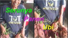 Serunya Panen Ubi Jalar Train, Baseball Cards, Youtube, Strollers, Youtubers, Youtube Movies