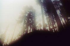 by alison scarpulla, via Flickr #woods #film