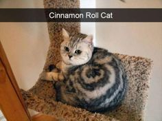 20 Pictures That Will Make You LOL