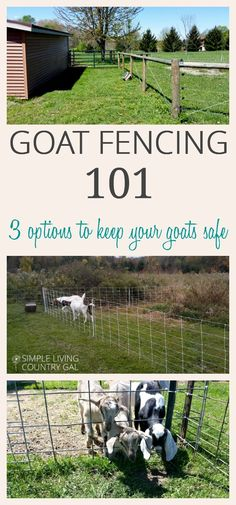 20 Best Goat fence images in 2019 | Goat barn, Goats, Goat