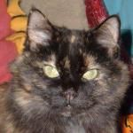 Purrsday Poetry: A poem. By Sweet Cee Cee Tortie find this amazing photo from Katzenworld  https://katzenworld.co.uk/2016/04/28/purrsday-poetry-a-poem-by-sweet-cee-cee-tortie/