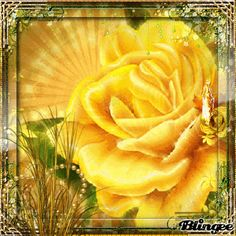 Yellow Rose Challenge,9-4-14,by preciousbaby63