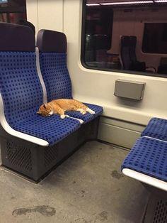ドイツの電車に猫が乗ってる01