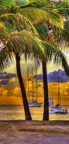 ~~St Maarten ~ Sunset, Ships and Palm Trees, Simpson Bay, Caribbean by Karen Wallace~~ Places To Travel, Places To See, The Places Youll Go, Dream Vacations, Vacation Spots, All Nature, Places Around The World, Belle Photo, Beautiful Beaches