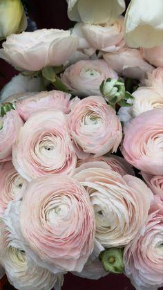 Rose Like Flowers, Flowers For Sale, Beautiful Flowers Garden, Burgundy Flowers, Blooming Flowers, Types Of Flowers, White Flowers, Ranunculus Wedding Bouquet, Ranunculus Flowers