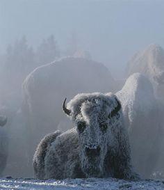 montana winters | Visit iexplore.com