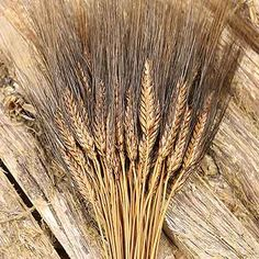 Burnt Oak Blackbeard Wheat Bundles, available in cases of 20 at Branches Wholesale.