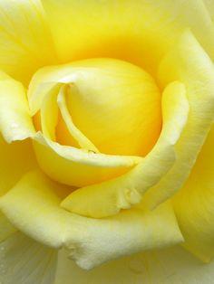 //Sunshine in a Flower - by Sheryl #flowers