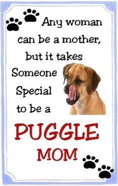 Puggle Mom