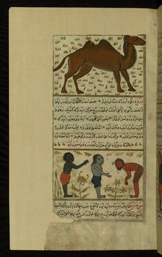 Title: A camel and three strange single-handed and single-legged creatures Form: Illustration