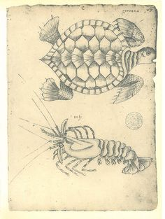 Vintage Turtle and Shrimp Print  Sketch Drawing by carambas, $16.00