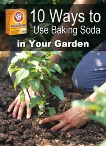 10 Ways to Use Baking Soda in Your Garden