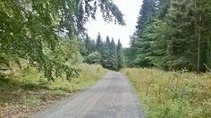 Waldspaziergang im Harz Country Roads
