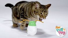 Friskie-Pull-N-Play: Cat Toy and Treat Design Fail