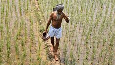India Bans GMO Seeds To Protect Health Of Citizens  Your News Wire #conspire420 #hiphopanonymous #undergroundhiphop