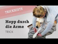 Hopp durch die Arme springen Hund Trick Hundetrick Hunde Beibringen Hundetraining video - YouTube