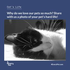 "There are times when we look at our pet and think ""What a great life"" or just smile ... Share with us these special moments!  Send photos by private message to 4EveryPet and see your best friend next week's edition  #4EveryPet #CatLife #Wally"