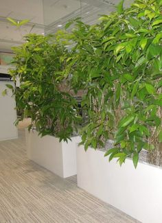 Samozavlažovací truhlíky Plants, Plant, Planets