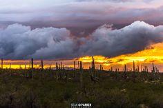 Tucson storm 2015