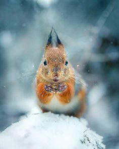 Photos of Forest Animals Joachim Munter