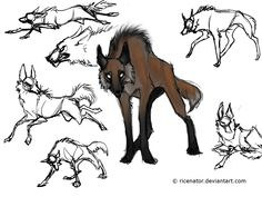maned wolf size comparison - Google Search