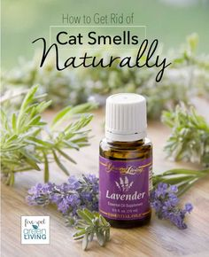 How to Get Rid of Cat Urine Smell Naturally - Five Spot Green Living - Healthy Recipes and Essential Oils