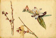 Slava Raskaj / Flower Sketch #raskaj #watercolor #croatia