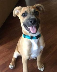 Happy puppy picture of Louie the rescue dog.  #barkinglaughs #puppies #doglovers #picturespicturesofpuppies