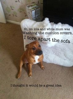 Hi, I'm Lola and while mum was washing the cushion covers, I tore apart the sofa! I thought it would be a great idea!