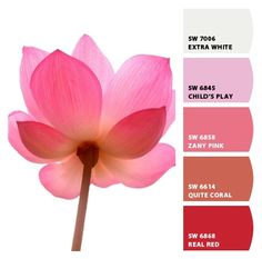 Lotus colors from Chip It! by Sherwin-Williams