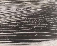 Martin Martinček, Sheep on pasture, 1964 - Slovakia? Documentary Photography, Map Art, Planet Earth, Old Photos, Sheep, Folk Art, City Photo, Nostalgia, Flora