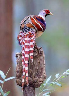 Publication de Nature and beauty Rare Birds, Exotic Birds, Colorful Birds, Tropical Birds, Most Beautiful Birds, Pretty Birds, Absolutely Gorgeous, Beautiful Creatures, Animals Beautiful