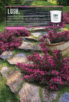 371 Best Zone 4 Landscaping Images Outdoor Gardens Garden